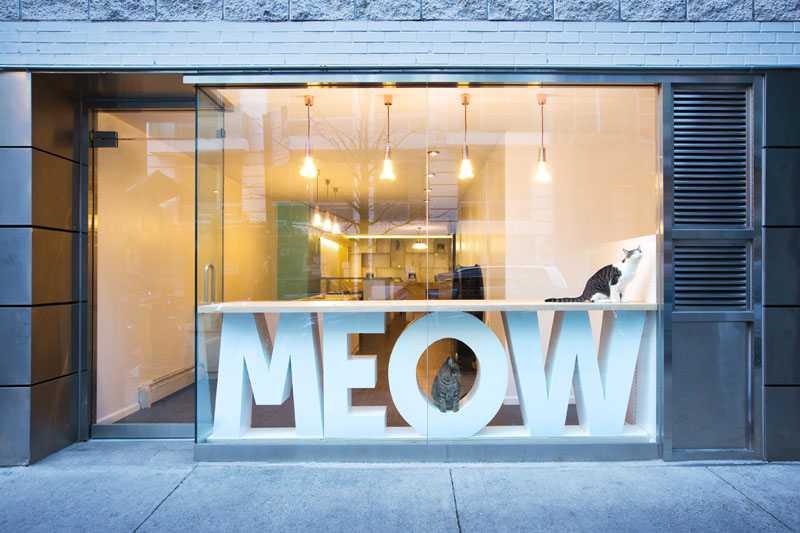 Kedi Cafe Meow Parlour
