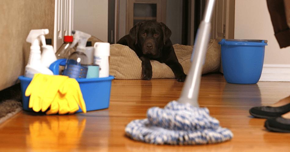 kolay ev temizeme fikirleri