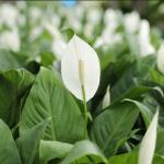 dekoratif ve sağlıklı bitkiler