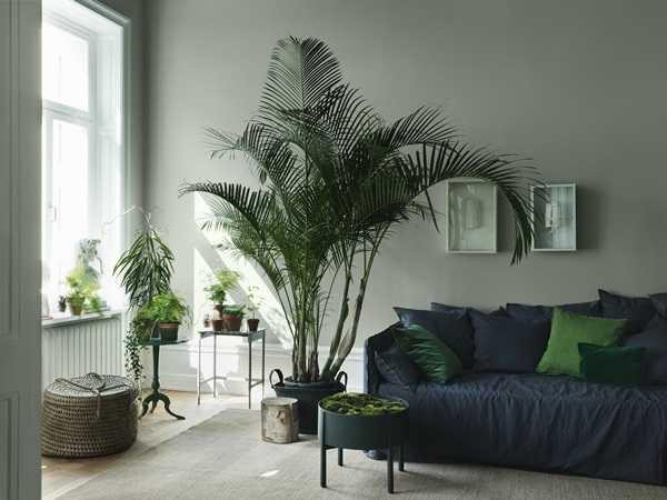 evinizi güzelleştiren bitkiler