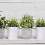 sağlıklı ev bitkileri